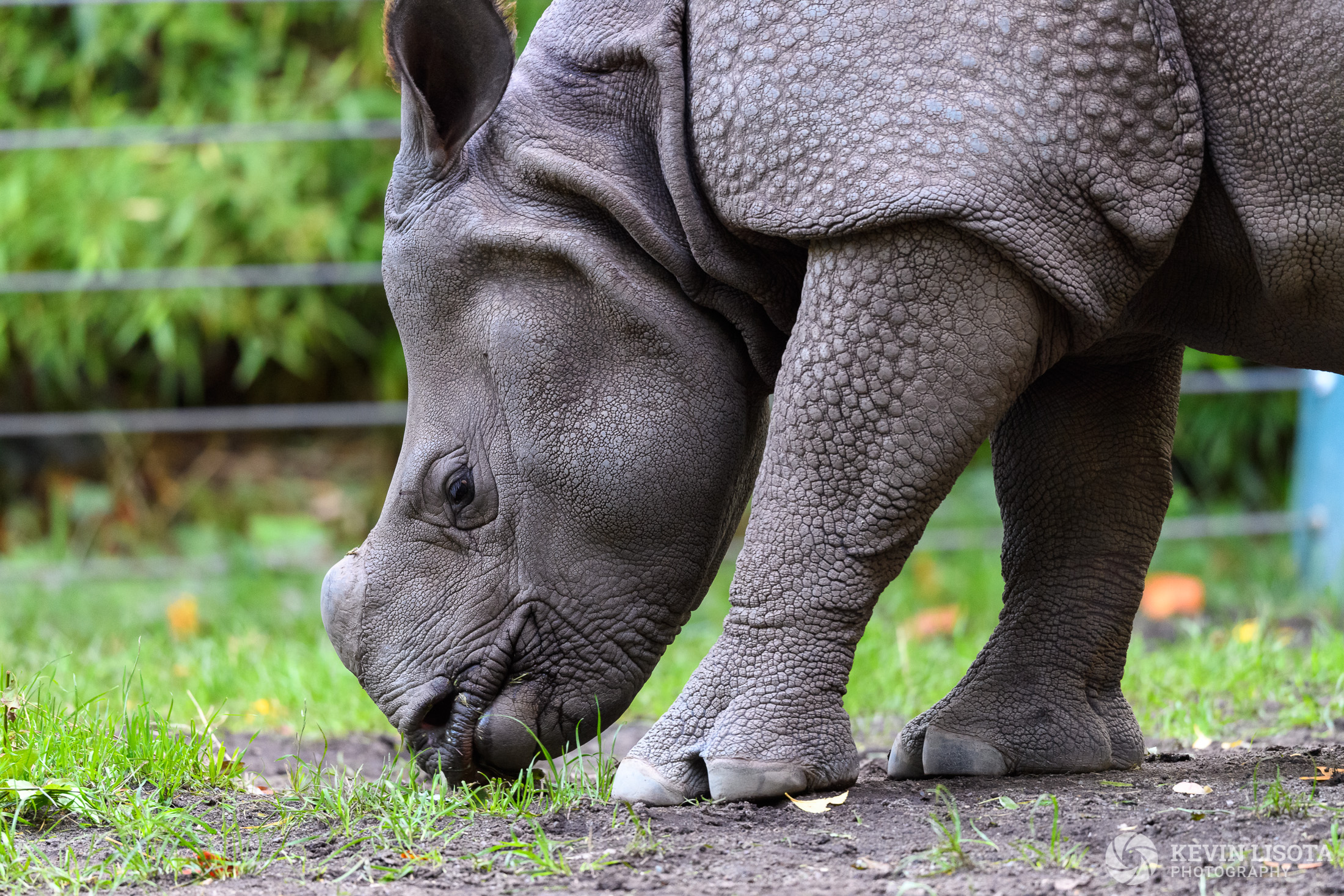 Rhinoceros - Woodland Park Zoo