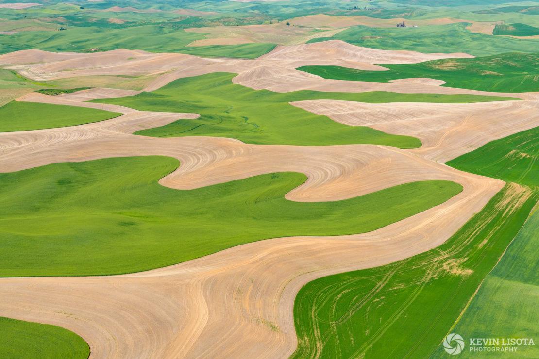 Flowing patterns of wheat fields in the Palouse