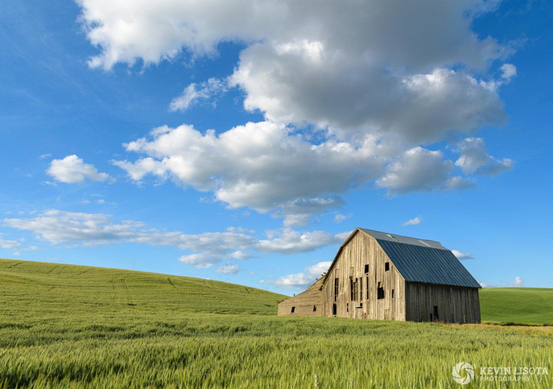 Old barn in wheat fields