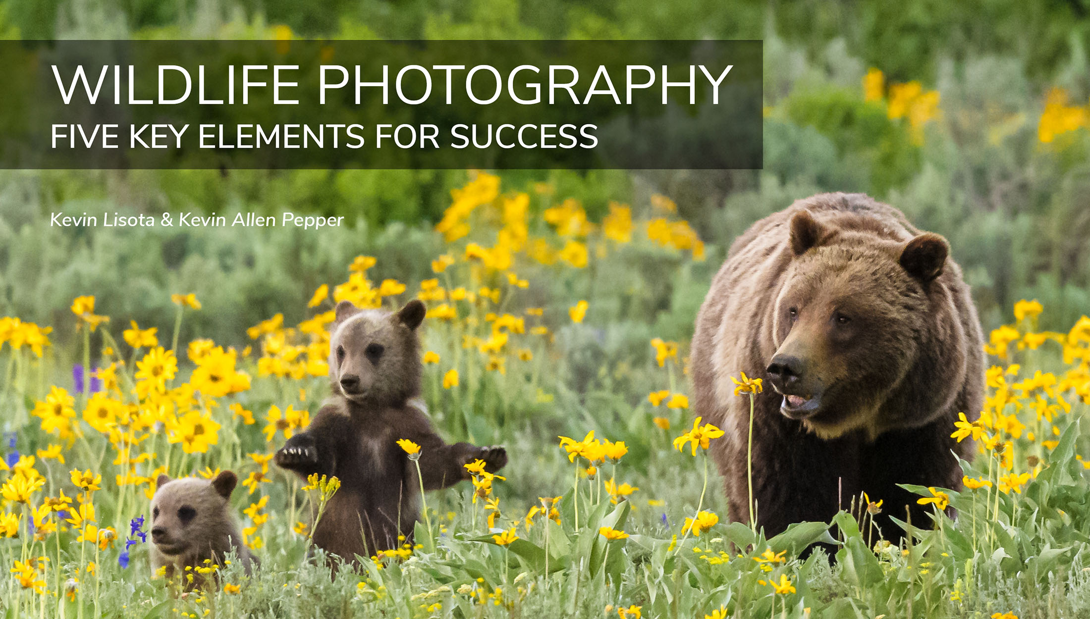 Wildlife Photography: Five Key Elements for Success