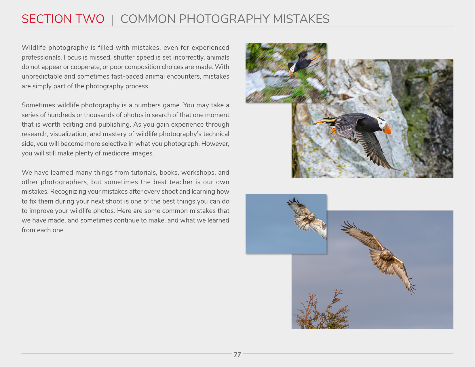 Wildlife Photography - Section Two